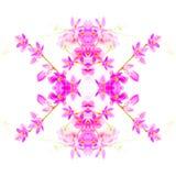 Coral Vine flower Stock Image