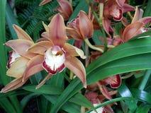 Coral, vino y blanco tropicales, orquídeas Fotos de archivo