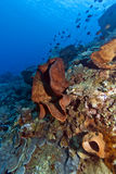 Coral wall off Bunaken island Stock Photo