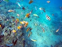 Coral Wildlife Bali Indonesia-de vissen van de waterkleur stock afbeelding