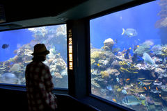 Coral World Underwater Observatory aquarium in Eilat Israel. EILAT, ISR - APRIL 16 2015:Visitor in Coral World Underwater Observatory aquarium in Eilat Israel stock photography