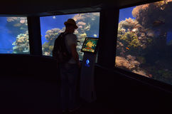 Coral World Underwater Observatory aquarium in Eilat Israel. EILAT, ISR - APRIL 16 2015:Visitor in Coral World Underwater Observatory aquarium in Eilat Israel royalty free stock image