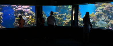 Coral World Underwater Observatory aquarium in Eilat Israel. EILAT, ISR - APRIL 16 2015:Visitors in Coral World Underwater Observatory aquarium in Eilat Israel royalty free stock photos