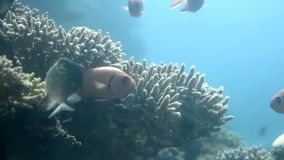 In Coral World Underwater Observatory in Eilat stock videobeelden