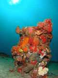 Coral on a Wreck. Beautiful Coral on the Ancient Mariner at 70 feet off the coast of south Florida Royalty Free Stock Images