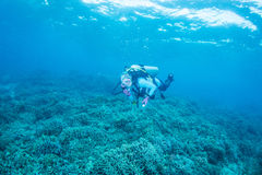 Coral y buceador Fotos de archivo