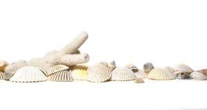Coral y conchas de berberecho Fotografía de archivo