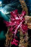 Coral y embarcadero suaves en Raja Ampat Foto de archivo libre de regalías