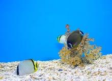 Coral y océano Fotografía de archivo