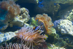 Coral y océano Imágenes de archivo libres de regalías