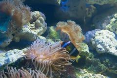 Coral y océano Foto de archivo libre de regalías