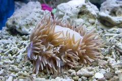 Coral y océano Fotografía de archivo libre de regalías