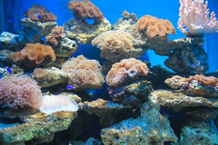 Coral y océano Imagen de archivo libre de regalías