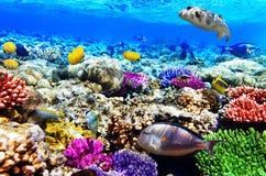 Coral y pescados foto de archivo