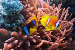 Coral y pescados foto de archivo libre de regalías