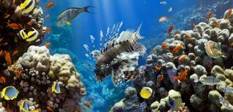 Coral y pescados fotos de archivo