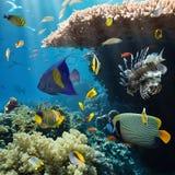 Coral y pescados Fotografía de archivo