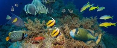 Coral y pescados imagen de archivo
