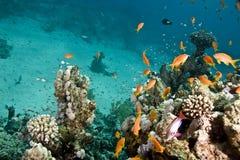 Coral y pescados Imagenes de archivo