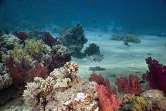 Coral y pescados Fotos de archivo libres de regalías