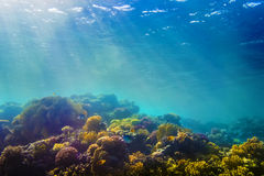 Coral y pescados en el Mar Rojo Fotos de archivo