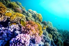 Coral y pescados en el Mar Rojo Imágenes de archivo libres de regalías