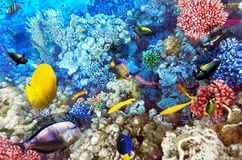 Coral y pescados en el Mar Rojo. Egipto, África. Fotografía de archivo
