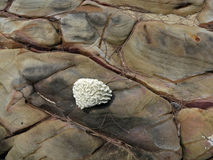 Coral y piedras de Backgroud Fotografía de archivo