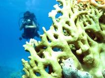 corales Foto de archivo libre de regalías