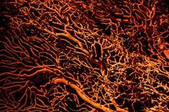 Corales anaranjados fotos de archivo
