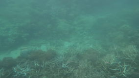 Corales blanqueados en la gran barrera de coral Queensland Australia metrajes
