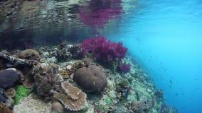 Corales coloridos en el borde del filón metrajes