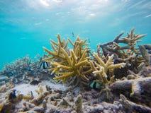 Corales con los pequeños pescados Fotografía de archivo libre de regalías