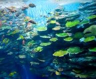 Corales con los pescados Imagen de archivo libre de regalías