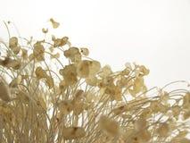 Corales del mar Fotos de archivo