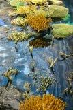 Corales en acuario del mar, con agua baja - algunos emergieron en el aire imagen de archivo libre de regalías