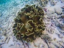 Corales en Maldivas Plantas del Océano Índico Imagenes de archivo