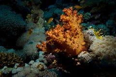 Corales hermosos en el filón imagen de archivo