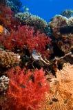Corales multicolores con el mar azul Imágenes de archivo libres de regalías
