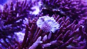 Corales para la investigación almacen de video