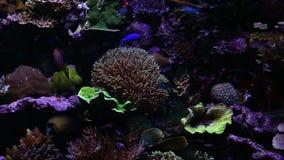 Corales para la investigación metrajes