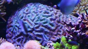 Corales para la investigación almacen de metraje de vídeo
