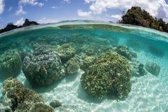 Corales que crecen en laguna fotos de archivo libres de regalías