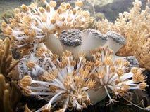 Corales suaves imagen de archivo