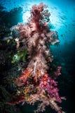 Corales suaves coloridos foto de archivo libre de regalías
