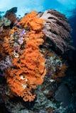 Corales suaves que crecen en el filón pacífico hermoso imagen de archivo