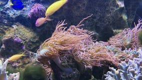 Corales suaves y duros, pescados metrajes