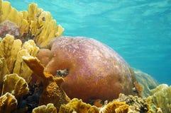 Corales subacuáticos con la superficie del agua en fondo Imagenes de archivo