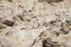 Corales y cáscaras fósiles Fotografía de archivo libre de regalías