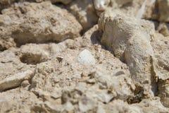 Corales y cáscaras fósiles Imagenes de archivo